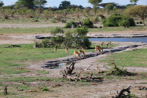 This upmarket game lodge offers easy day game drives to the Savuti Marsh area and the Chobe River front